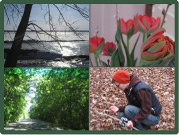 Seasons photo collage
