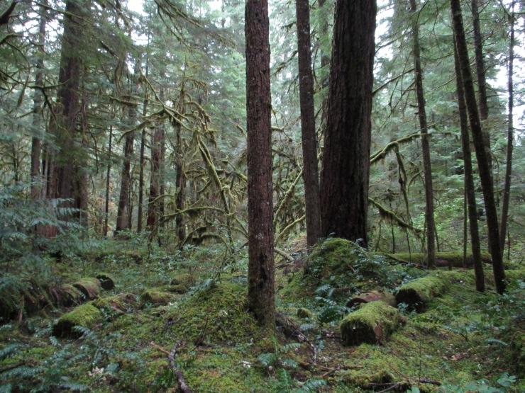 Log Decomposition Site